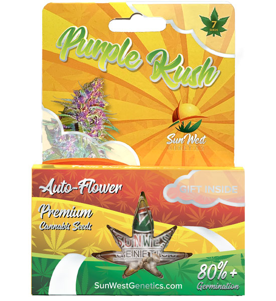 purple kush strains