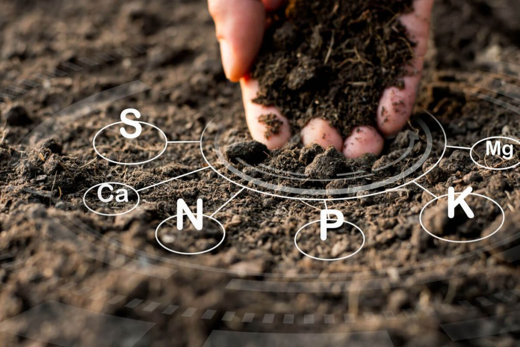 Which Soil To Use To Get Good Marijuana Plants