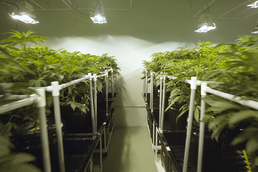 Plasma or Magnetic Induction Grow Lights