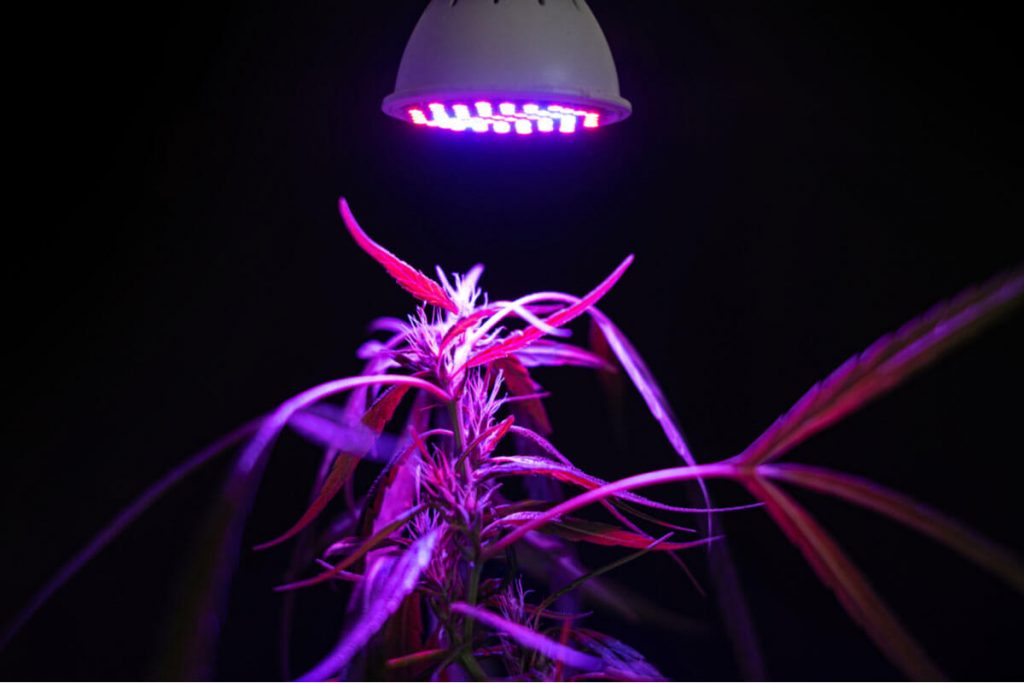How To Increase Grow Light Intensity