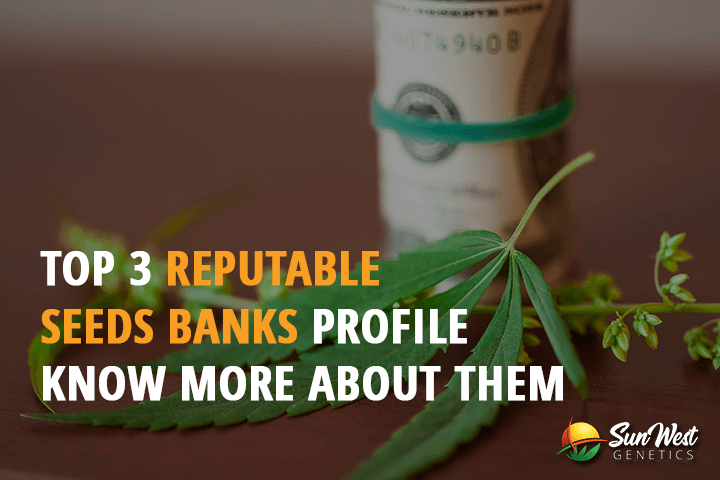 top 3 reputable seed banks profile know more about them
