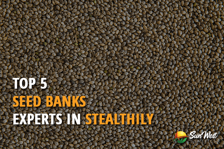 top 5 seed banks experts in stealthily cannabis seeds shipping