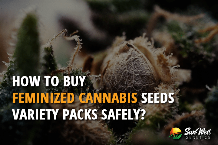 how to buy feminized cannabis seeds variety packs safely