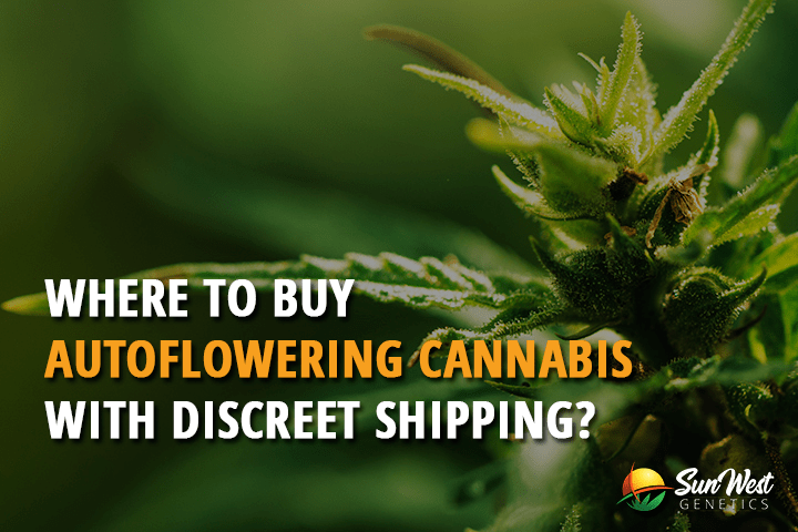 Where To Buy Autoflowering Cannabis with Discreet Shipping?