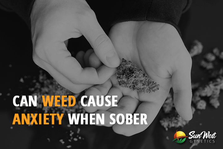 can weed cause anxiety when sober