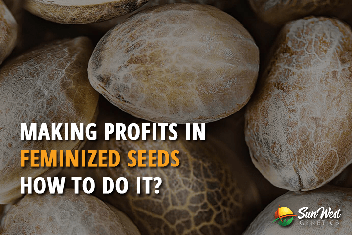 making profits in feminized seeds how to do it
