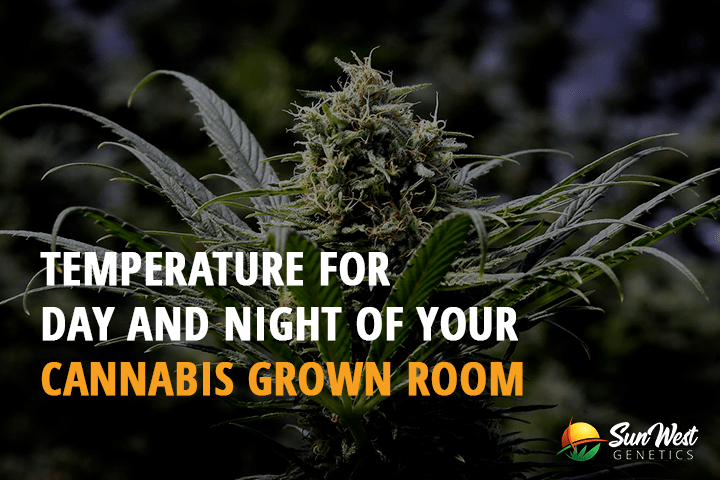 temperature for day and night of your cannabis grown room