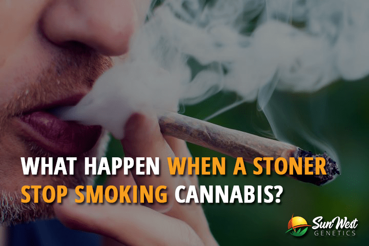 What Happens when a Stoner Stop Smoking Cannabis?
