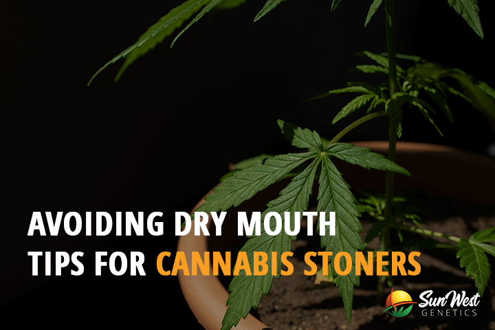 avoiding dry mouth tips for cannabis stoners