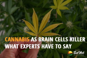 cannabis as brain cells killer what experts have to say