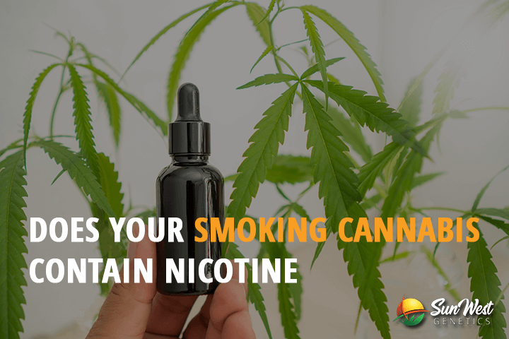 does your smoking cannabis contain nicotine