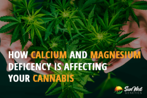 how calcium and magnesium deficiency is affecting your cannabis