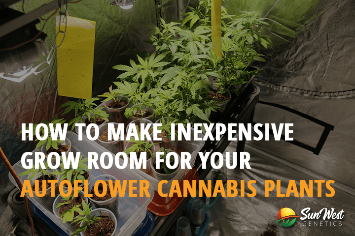 how to make inexpensive grow room for your autoflower cannabis plants