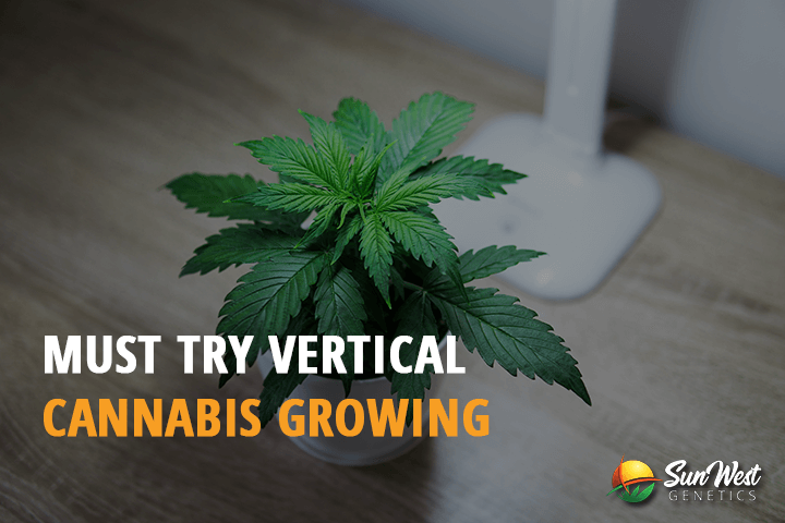 vertical cannabis growing