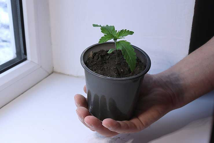 Pot Containers