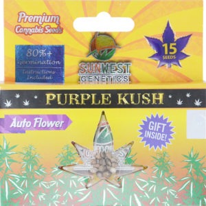 purple kush marijuana seeds
