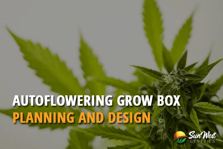 autoflower grow box