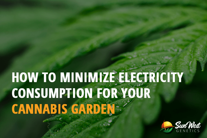 How to Minimize Electricity Consumption for your Cannabis Garden