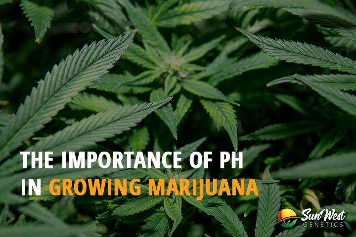 The Importance of PH in Growing Marijuana