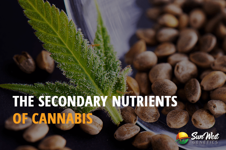 The Secondary Nutrients for Cannabis