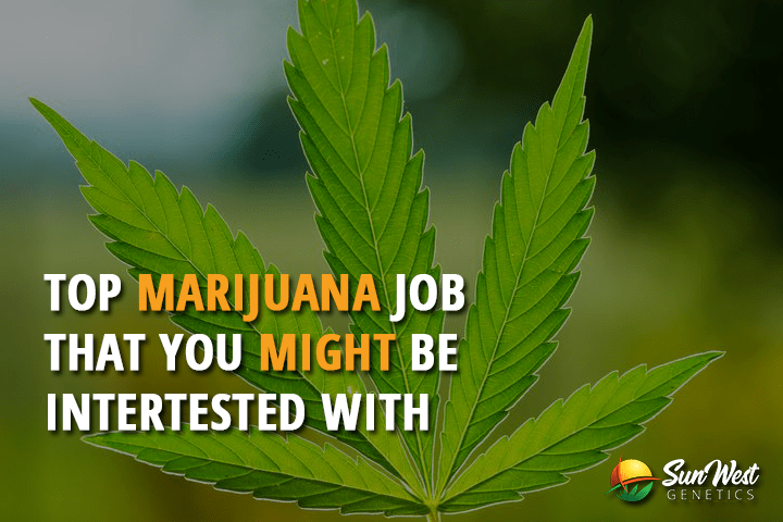 Top Marijuana Related Jobs that you Might be Interested With