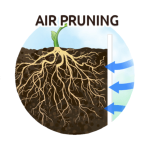 air prunning marijuana cannabis plants