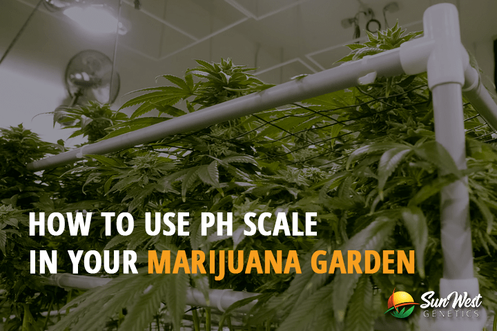 How to use pH Scale in your Marijuana Garden