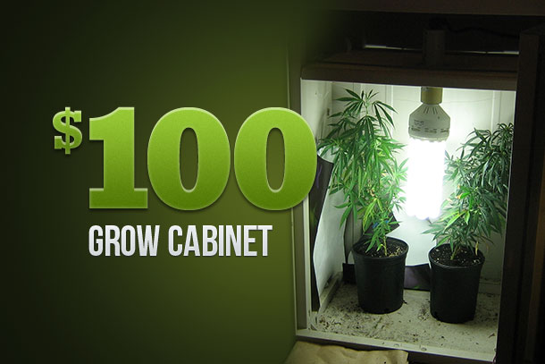 grow weed cabinet
