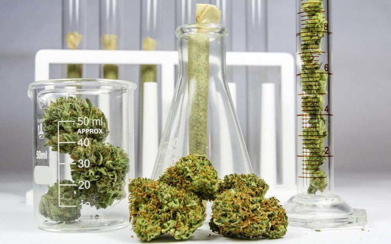 Cannabis and Phosphorous
