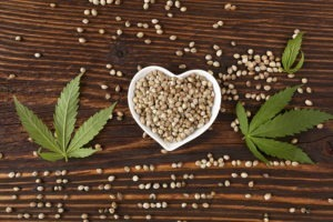 cbd cannabis seeds