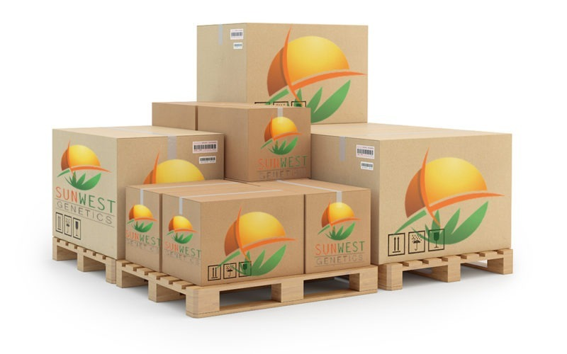 wholesale cannabis seeds