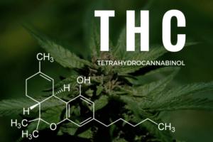 THC levels in marijuana