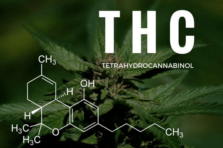 THC levels in marijuana