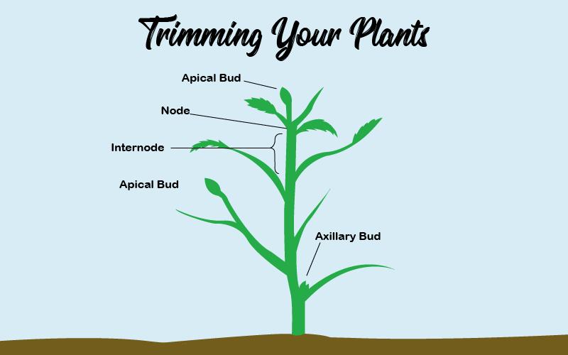 Marijuana plant parts