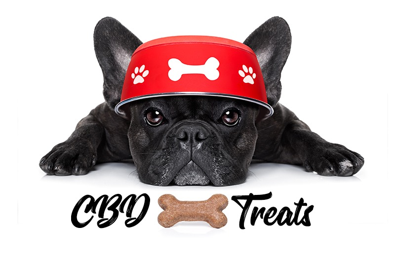 CBD Treats to Help Calm Barking and Anxious Dogs