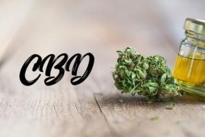 cbd oil and marijuana
