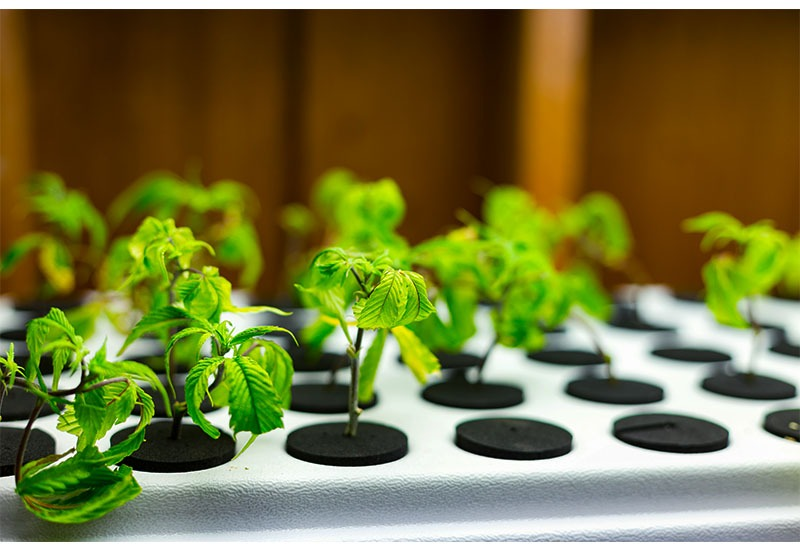 Hydroponic Nutrient Solutions Explained
