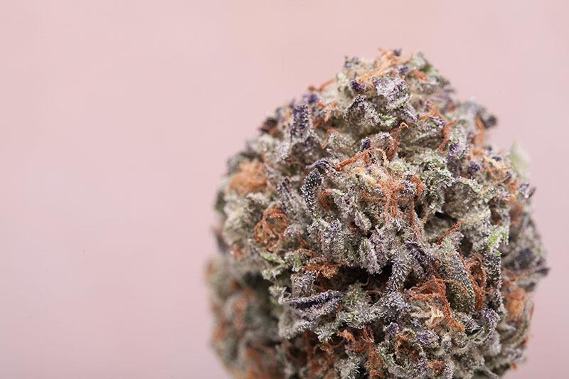 springtime marijuana strains