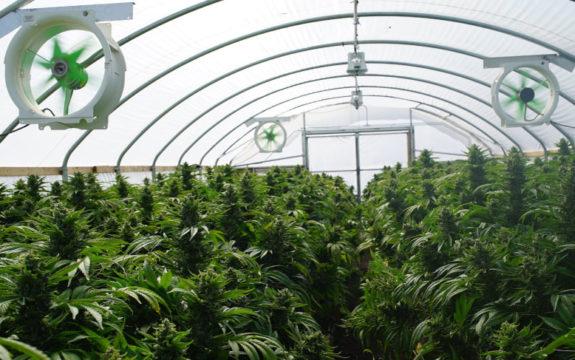 marijuana grow room ventilation