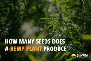 hemp seeds high cbd