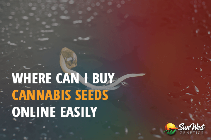 where can i buy cannabis seeds online