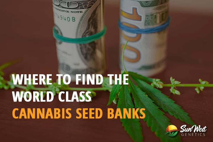 world class cannabis seeds