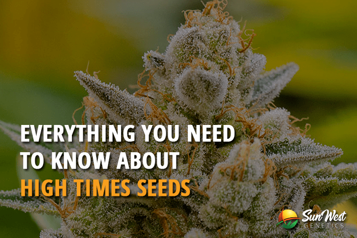 Everything You Need to Know About High Times Seeds