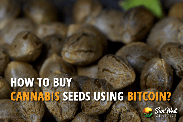 How to Buy Cannabis Seeds Using Bitcoins?