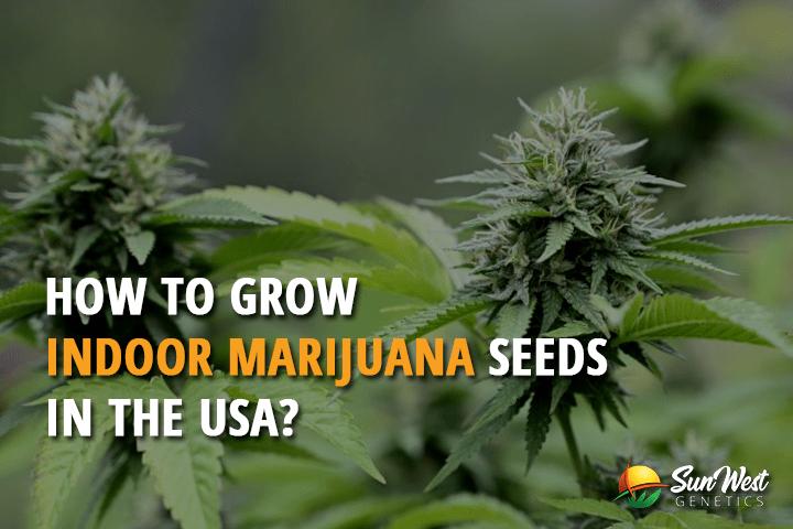 How To Grow Indoor Marijuana Seeds In The Usa