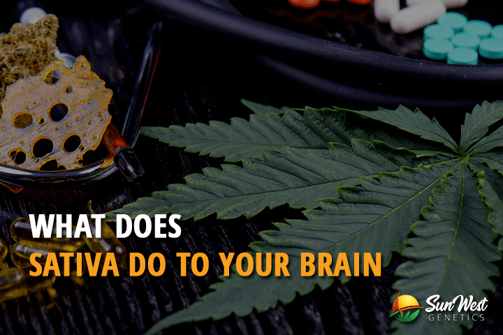 What Does Sativa Do to Your Brain