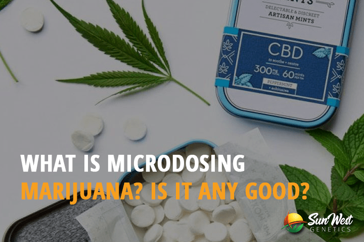 What is Microdosing Marijuana? Is it Any Good?