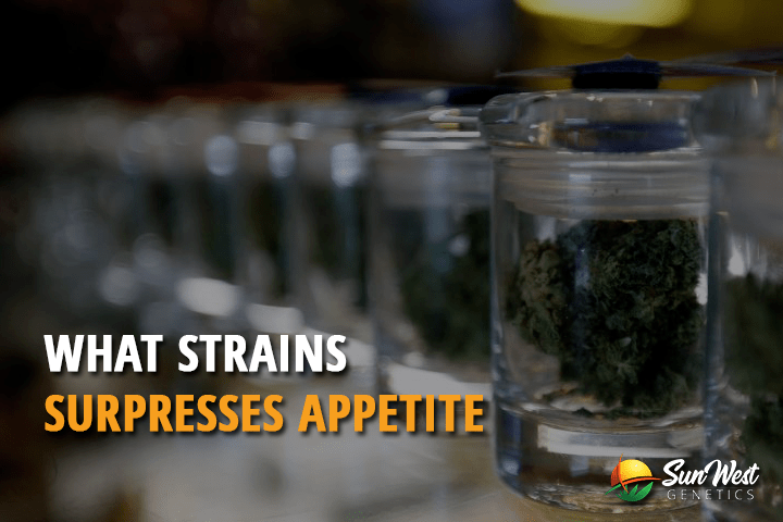 What Strains Suppresses Appetite?