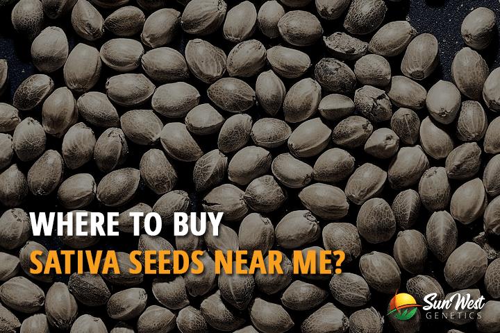 Where to Buy Sativa Seeds Near Me?