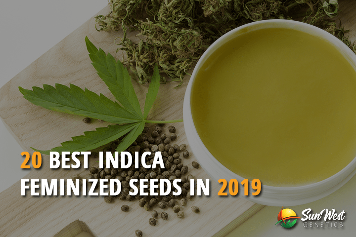 20 Best Indica Feminized Seeds in 2019